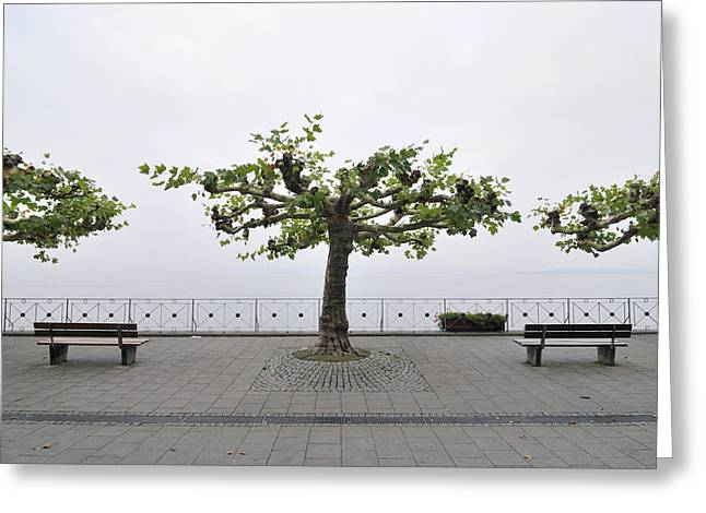 Off Season Greeting Cards - Trees and benches Greeting Card by Matthias Hauser