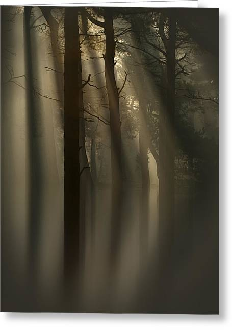 Crepuscular Rays Greeting Cards - Trees and Light Greeting Card by Andy Astbury