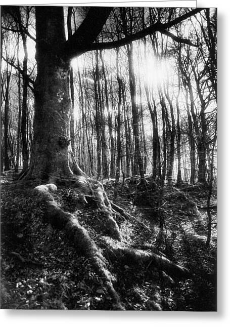 Bare Tree Photographs Greeting Cards - Trees at the entrance to the Valley of No Return Greeting Card by Simon Marsden