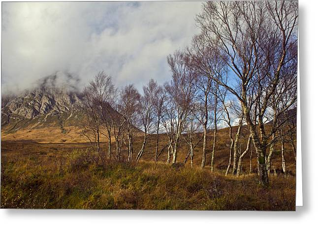 Buachaille Etive Mor Greeting Cards - Trees below Stob Dearg Greeting Card by Gary Eason