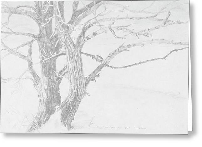 Trees In Snow Drawings Greeting Cards - Trees in a Snow Storm Greeting Card by David Bratzel