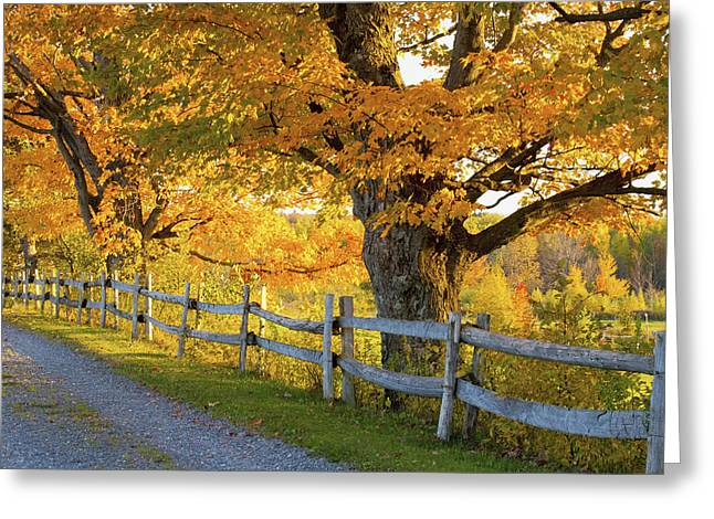 Trees In Autumn Colours And A Fence Greeting Card by David Chapman