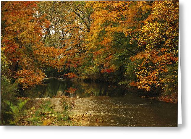 Plant Color Changes Greeting Cards - Trees In Fall Colors Reflected In Big Greeting Card by Raymond Gehman