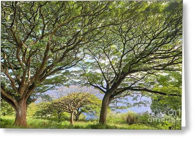 ; Maui Greeting Cards - Trees in Hana Maui Hawaii Greeting Card by Dustin K Ryan