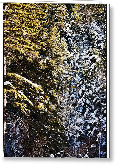 Trees In Taos Village Greeting Card by Lisa  Spencer