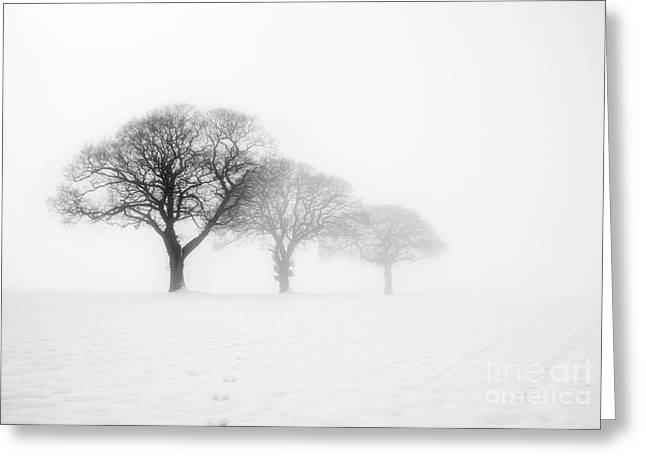 Minimal Landscape Greeting Cards - Trees In The Mist Greeting Card by Janet Burdon