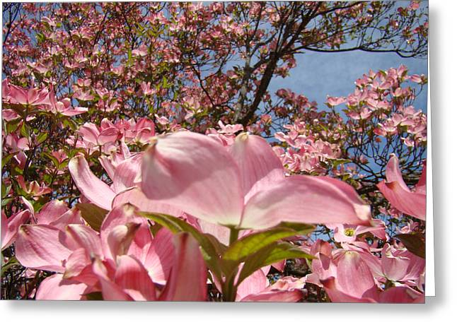Pink Flower Prints Greeting Cards - Trees Nature Fine Art Prints Pink Dogwood Flowers Greeting Card by Baslee Troutman
