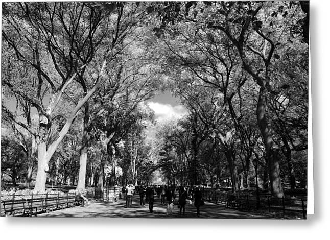 TREES on the MALL in CENTRAL PARK in BLACK AND WHITE Greeting Card by ROB HANS