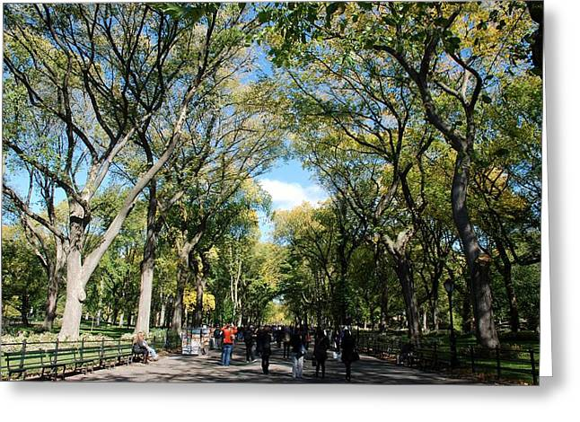 TREES on the MALL in CENTRAL PARK Greeting Card by ROB HANS