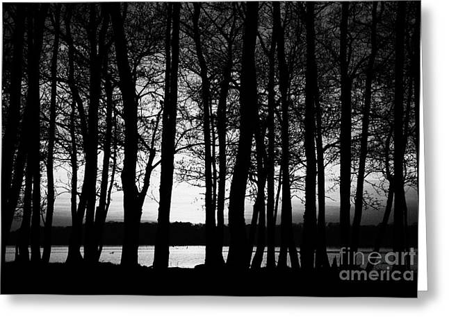 Neagh Greeting Cards - Trees On The Shore Of Lough Neagh County Antrim Northern Ireland Greeting Card by Joe Fox