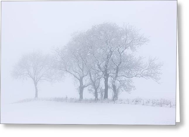Trees Seen Through Winter Whiteout Greeting Card by John Short