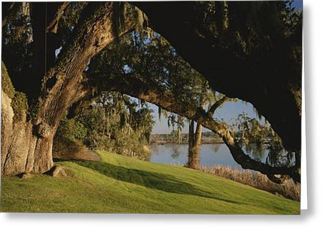 Moss Greeting Cards - Trees Shrouded In Spanish Moss Grow Greeting Card by Michael Melford