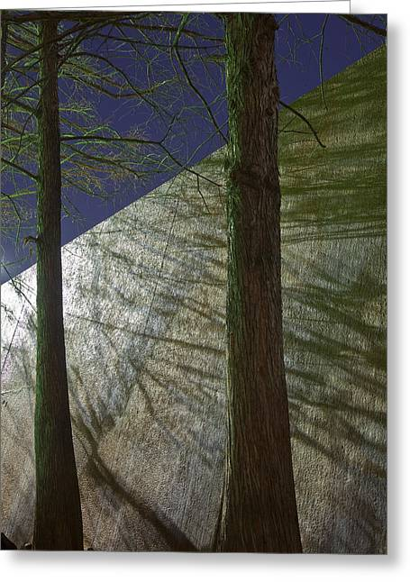 Tyree Greeting Cards - Trees Sky Shadow Greeting Card by Greg Kopriva