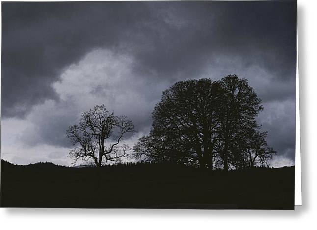 Refuges And Reserves Greeting Cards - Trees Stand In Silhouette On A Dark Greeting Card by Bates Littlehales