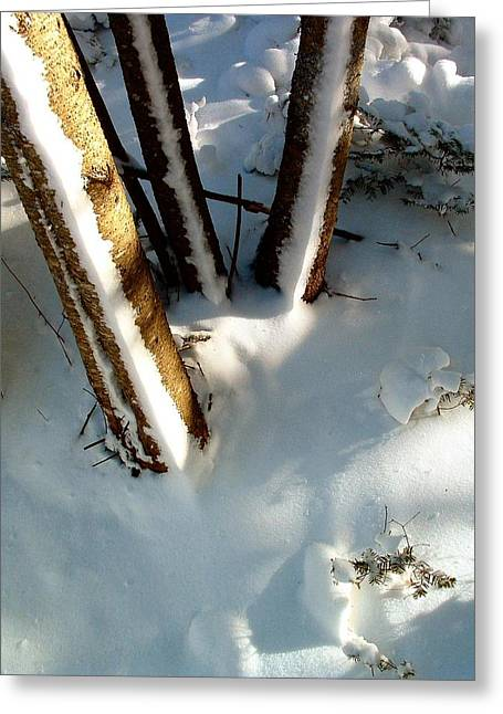 Drifting Snow Greeting Cards - TREES Trio in architectural order Greeting Card by William OBrien