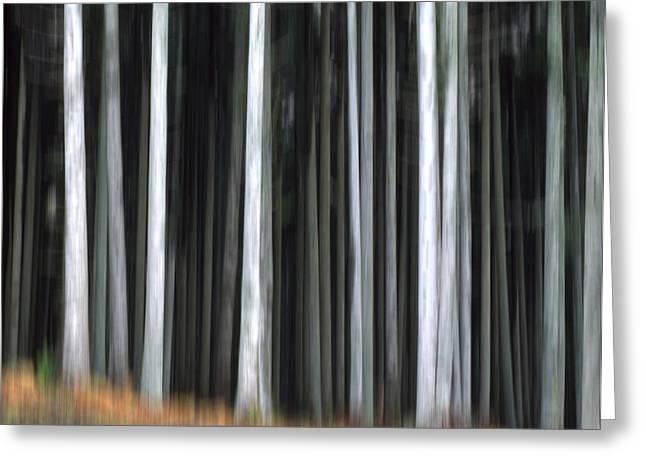Spruce Trees Greeting Cards - Trees trunks Greeting Card by Bernard Jaubert