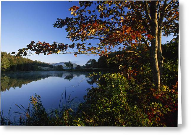 Trees With Fall Colors Along The Still Greeting Card by Michael Melford