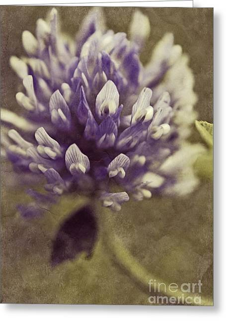 Texture Floral Photographs Greeting Cards - Trefle en Solo - s03bt04 Greeting Card by Variance Collections