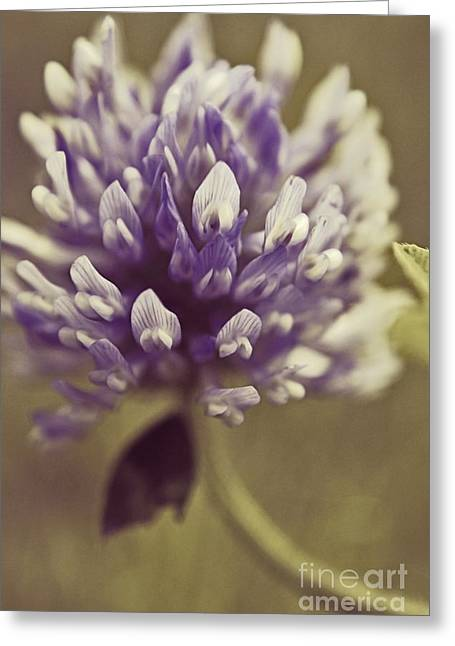 Clover Greeting Cards - Trefle en Solo s03b Greeting Card by Variance Collections