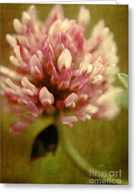 Textured Floral Greeting Cards - Trefle en Solo Greeting Card by Variance Collections