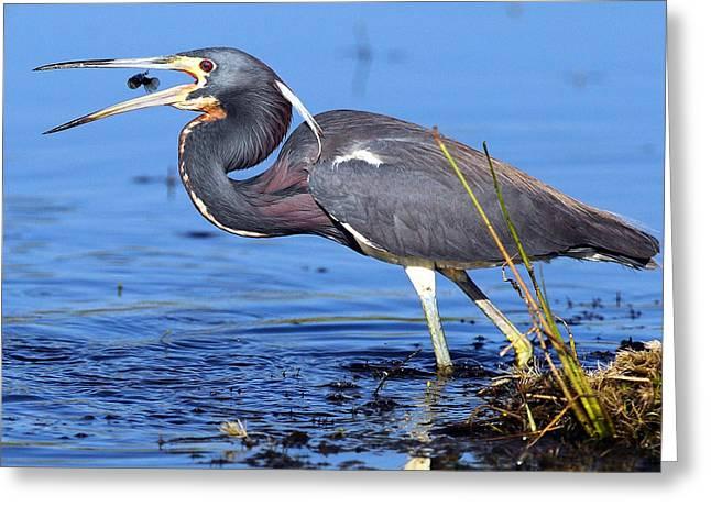 Tri Heron Fishing Greeting Card by Rick Mann