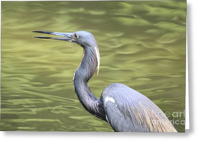 Tri Colored Greeting Cards - Tri Heron On Silk Greeting Card by Deborah Benoit