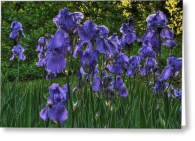 Vale Greeting Cards - Tribe of Iris Greeting Card by William Fields