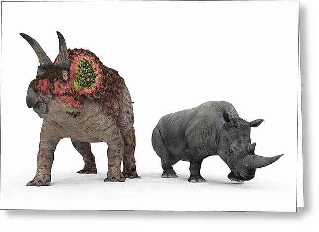 Triceratops Greeting Cards - Triceratops Dinosaur And Rhino Greeting Card by Walter Myers