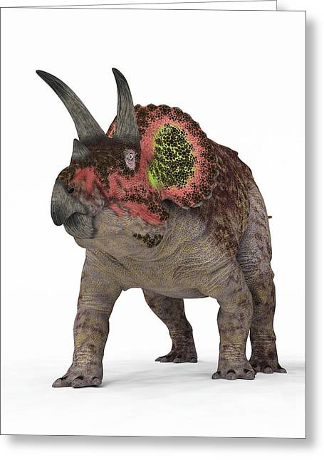 Triceratops Greeting Cards - Triceratops Dinosaur Greeting Card by Walter Myers