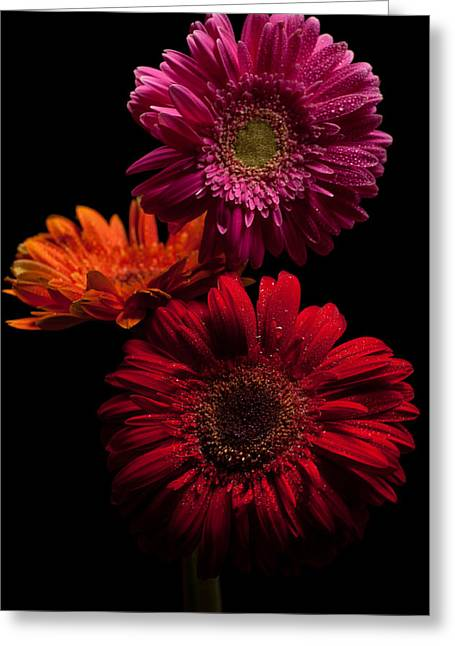 Trio Greeting Card by Ron Smith