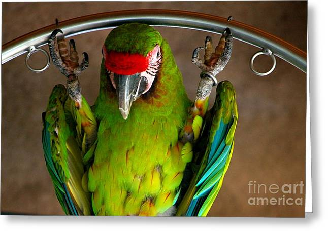 Amazon Greeting Card Greeting Cards - Trix are For Kids and Birds Greeting Card by Carol Christopher