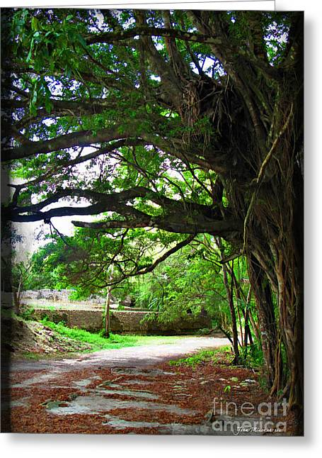 Best Sellers -  - Mangrove Forest Greeting Cards - Tropical Banyan Path Greeting Card by Joan  Minchak