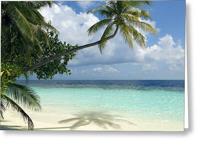 Tropical Oceans Greeting Cards - Tropical Beach Greeting Card by Peter Scoones