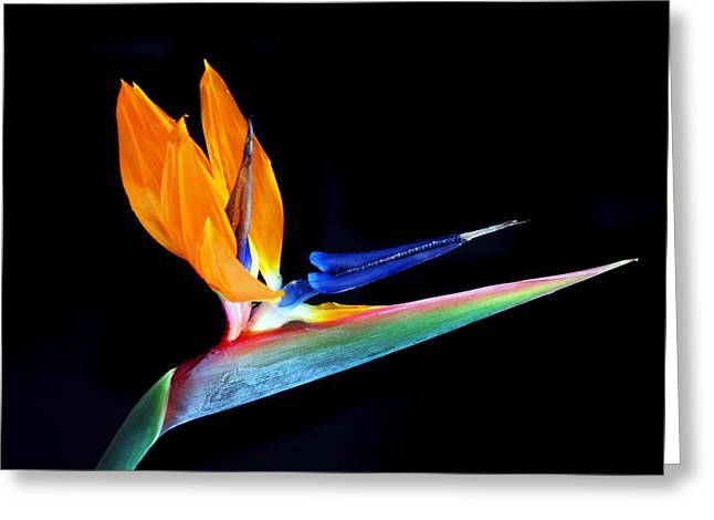 Tropical Beauty Greeting Card by Terence Davis