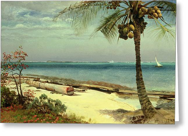 Tropical Trees Greeting Cards - Tropical Coast Greeting Card by Albert Bierstadt
