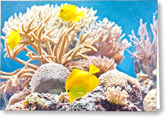 Tropical Wildlife Greeting Cards - Tropical fish Greeting Card by Tom Gowanlock