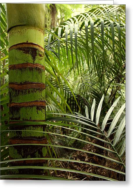 Bush Greeting Cards - Tropical forest jungle Greeting Card by Les Cunliffe
