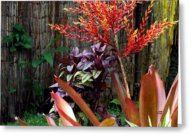 Tropical Garden Greeting Card by Karon Melillo DeVega