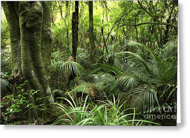 Bush Greeting Cards - Tropical jungle Greeting Card by Les Cunliffe