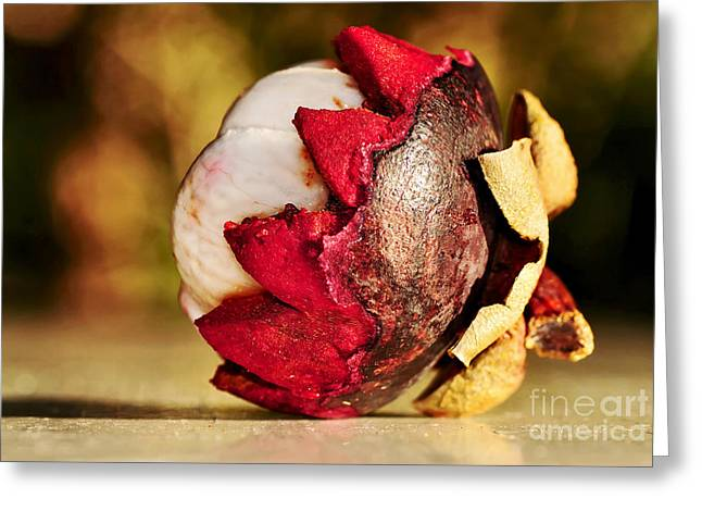 Mangosteen Greeting Cards - Tropical Mangosteen - ready to eat Greeting Card by Kaye Menner