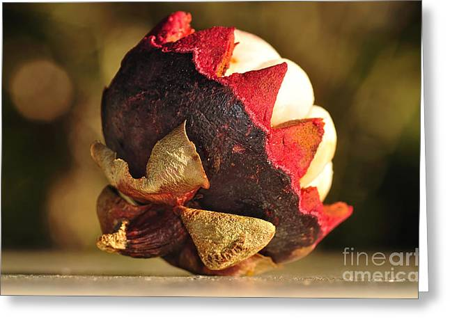 Tangy Photographs Greeting Cards - Tropical Mangosteen - The medicinal fruit Greeting Card by Kaye Menner