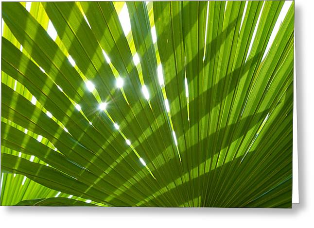 Frond Greeting Cards - Tropical Palm Leaf Greeting Card by Amanda And Christopher Elwell
