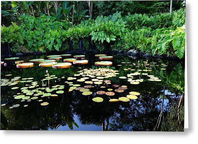 Water Lilly Greeting Cards - Tropical Pond Greeting Card by Armando Perez