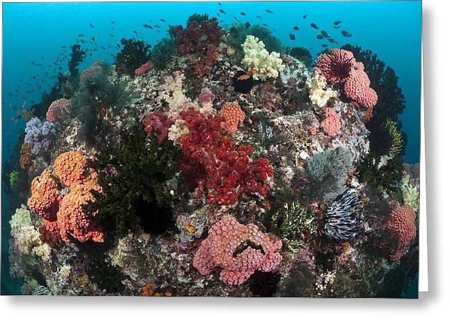 Star Fish Greeting Cards - Tropical Reef, Indonesia Greeting Card by Matthew Oldfield