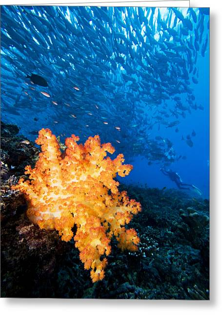 Snorkeling Photos Greeting Cards - Tropical Reef Scene Greeting Card by Dave Fleetham - Printscapes