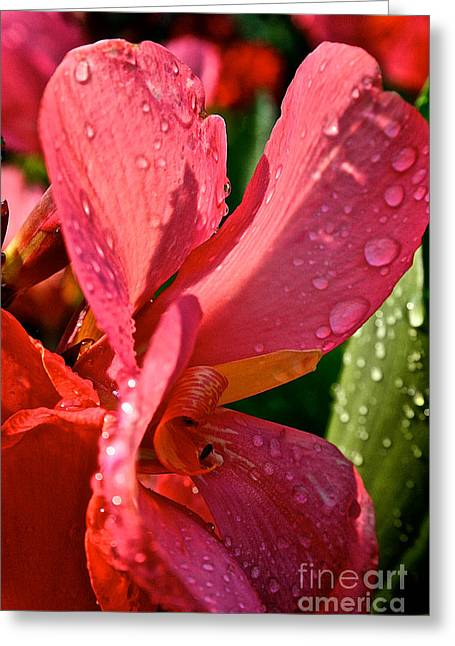 Tropical Rose Canna Lily Greeting Card by Susan Herber