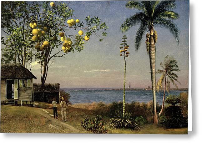 Shack Paintings Greeting Cards - Tropical Scene Greeting Card by Albert Bierstadt