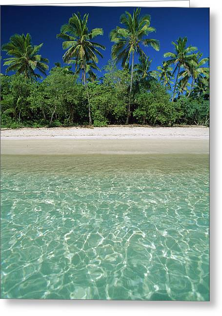 Ai Greeting Cards - Tropical Scene With Palm Trees, Uoleva Greeting Card by Jean-Marc La Roque