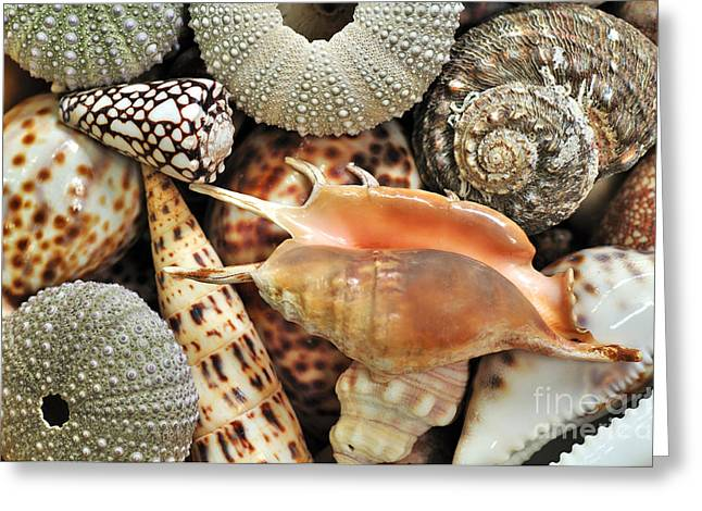 Spotted Shells Greeting Cards - Tropical Shells Greeting Card by Kaye Menner