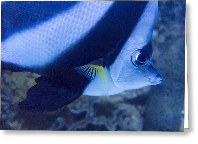 Decorative Fish Greeting Cards - Tropical Side View Greeting Card by Darcy Michaelchuk